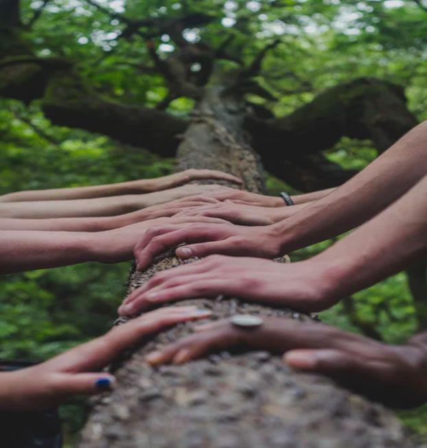Trees & Hand